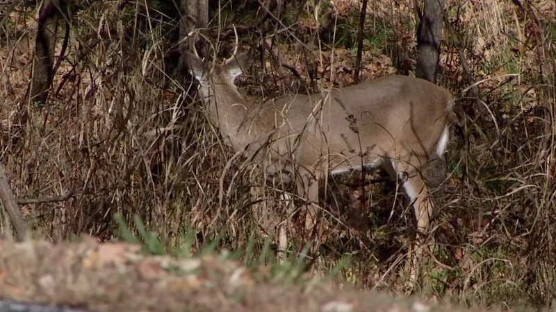 More legal trouble for man accused of operating hunting scheme.