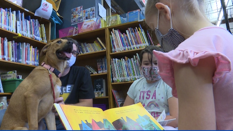 The books they're reading are about shelter rescue dogs...so a librarian at Westport Elementary...