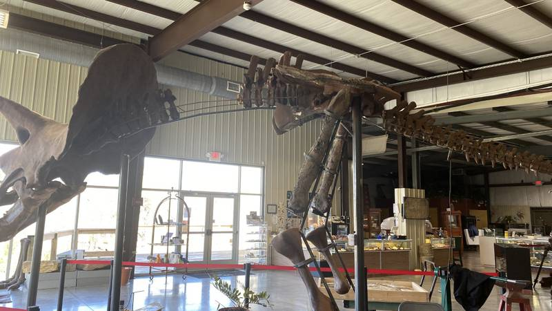 The Missouri Institute of Natural Science is a free museum located in Springfield.