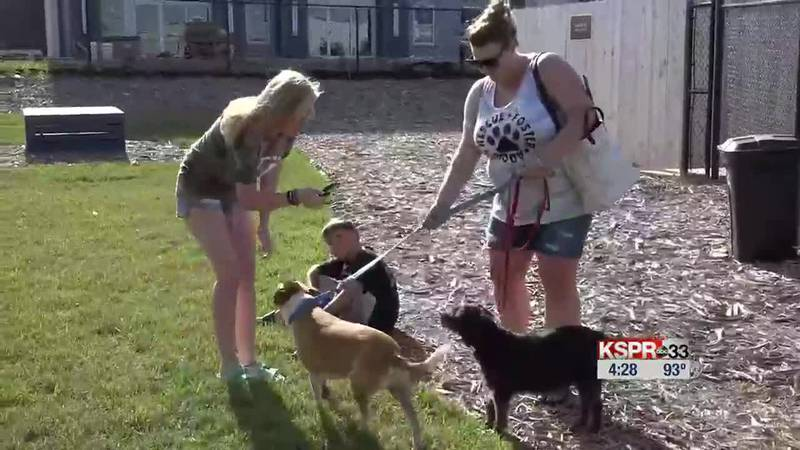 4 the Love of K9's Yappy Hour is Saturday at the Bark Yard