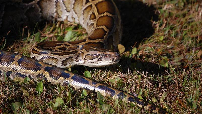 Missouri Department of Conservation explains how to handle snake bites