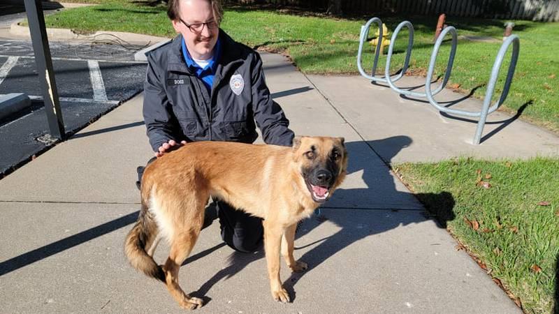 This female German Shepherd turned up on the Willard Intermediate campus