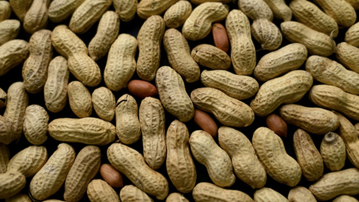 This Feb. 20, 2015 file photo shows an arrangement of peanuts in New York. (AP Photo/Patrick Sison, File)