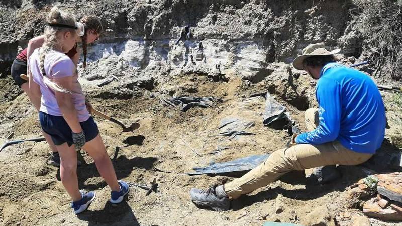 Mila participates in a dig