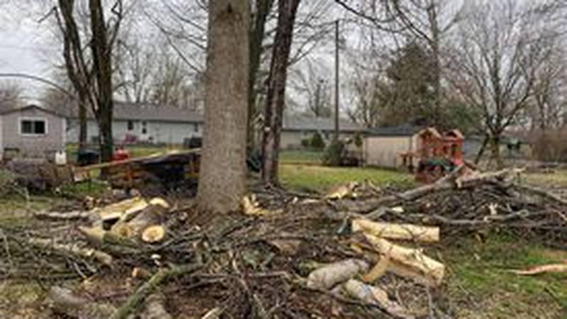 Lightning strike shatters tree in Nixa