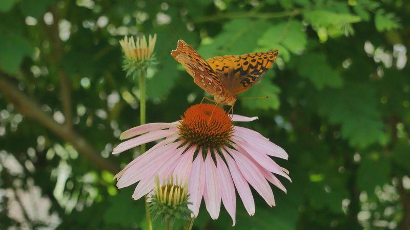 Butterfly Festival in Springfield.