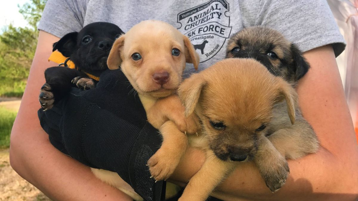 Humane Society Rescues 55 Dogs From 2 West Plains Homes