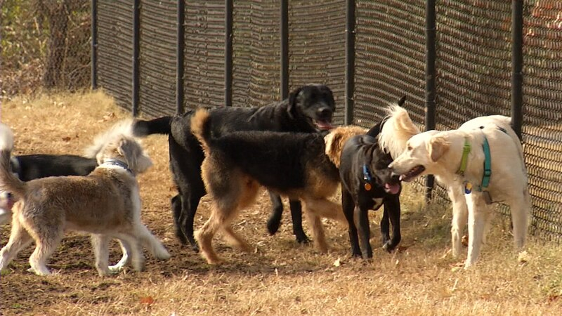 If you live in Branson city officials want to hear from you about a new proposed animal...