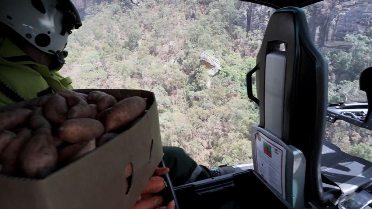 Crews airdrop food for wallabies in Australia. (Source: NSW Government, CNN)