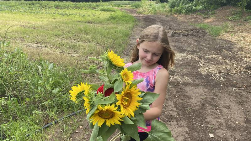 Families can enjoy a day of picking their own bouquets at Fassnight Creek Farm.