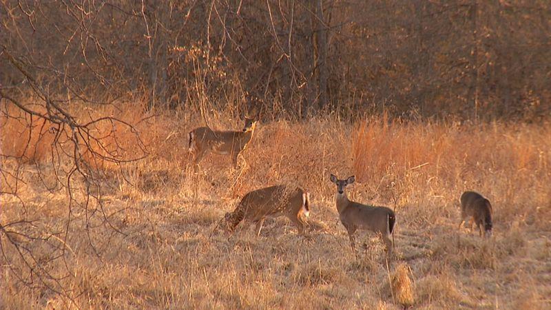 Youth deer hunting season began Saturday.