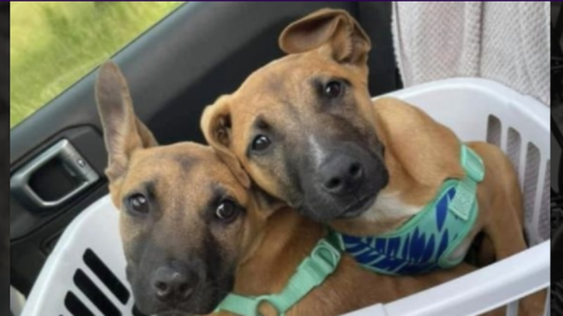 4 the Love of K9's is hosting a Yappy Hour adoption event