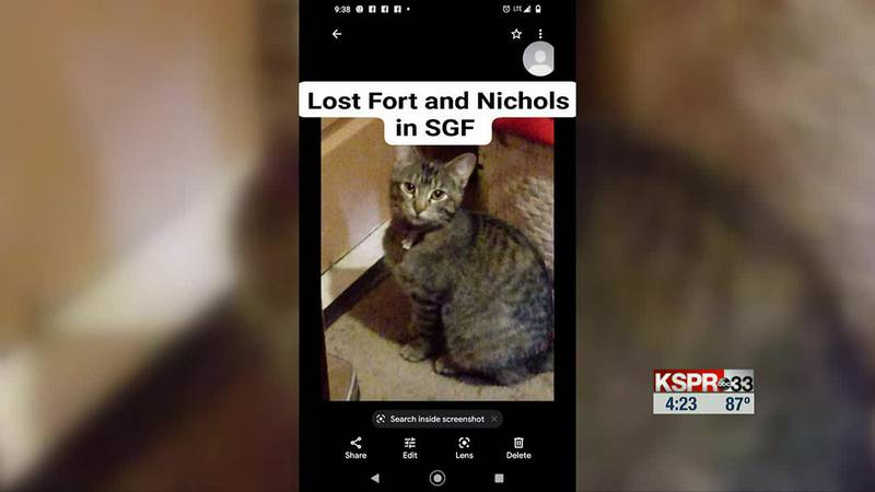 Two cats are missing from a Springfield home