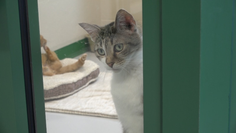 The Humane Society of Southwest Missouri is inviting the community to its shelter Friday to be...