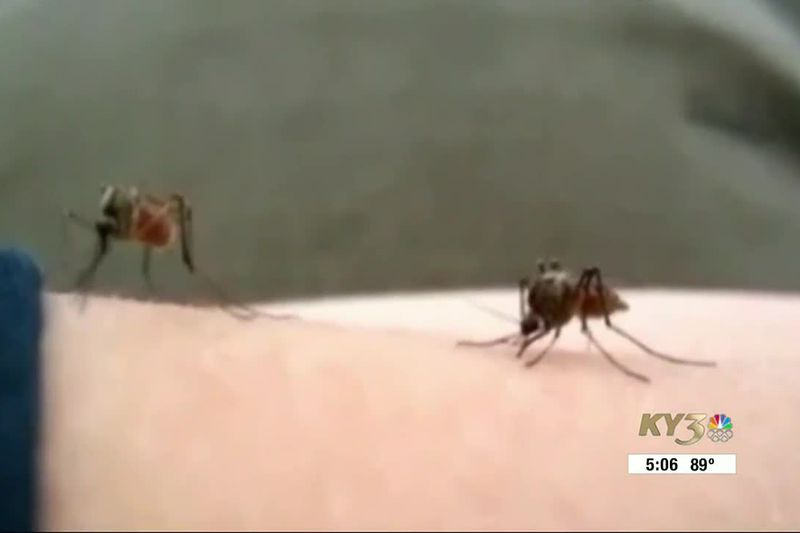 As the weather is getting warmer, you may notice more mosquitoes outside and feel that itch...
